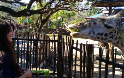 Feeding a giraffe *February 2012*